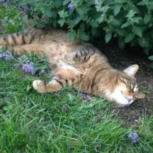 rose hill cat