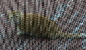 BPR Cat Found
