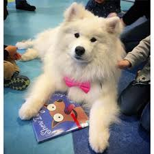 Storytime with Dog @ Wayland Library | Wayland | Massachusetts | United States
