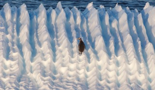 Antarctica: Travels at the End of the World  @ Wayland Library | Wayland | Massachusetts | United States